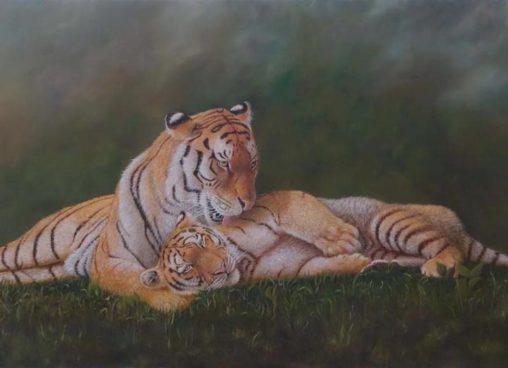 Tigresse et son petit