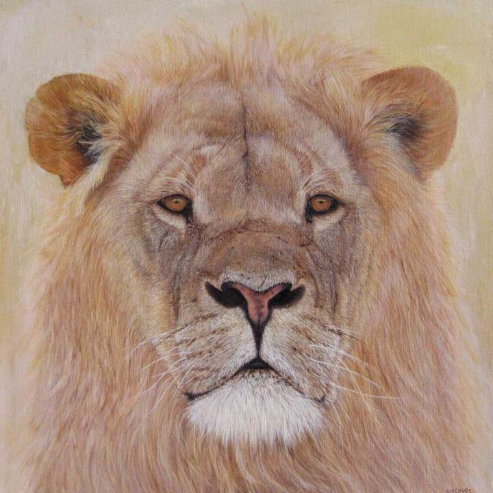 Lion du Kalahari
