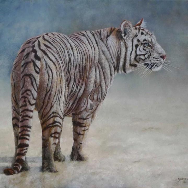 Tigre blanc dans la neige