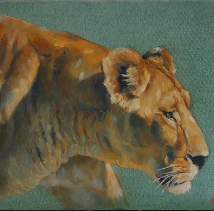 Lionne marchant