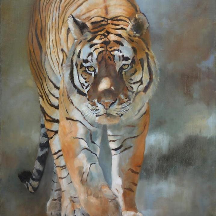 Tigre de face marchant